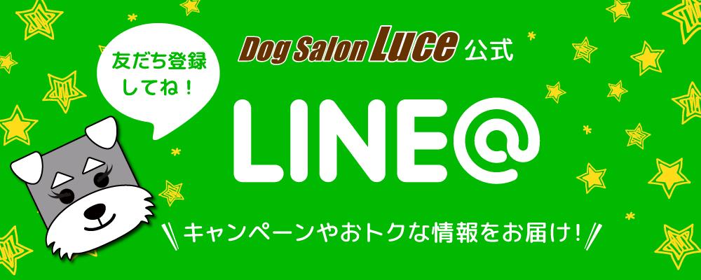 Dog Salon Luce の公式LINE@アカウント