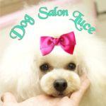 Dog Salon Luce